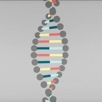 DNA Explained | Visual.ly | Going Digital | Scoop.it
