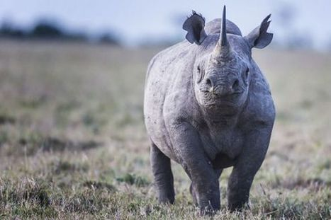 One Coal Company's Plan to Become Neighbors With Africa's First Rhino Preserve | What's Happening to Africa's Rhino? | Scoop.it