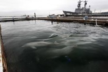 Trained Navy Dolphins Losing Out To Robots | News | Manufacturing.net | Manufacturing In the USA Today | Scoop.it