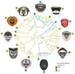 Evolution is written all over your face | Psychology and Brain News | Scoop.it