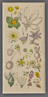 a grammar of botany | Botany Whimsy | Scoop.it