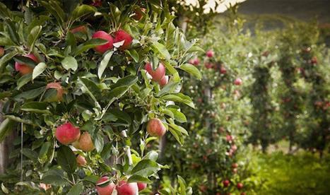 Food Forests a Solution to Food Scarcity - DesignBuild Source - DesignBuild Source | Wellington Aquaponics | Scoop.it