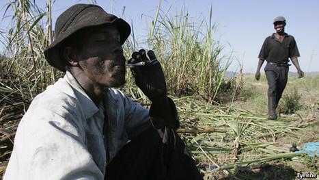 Marijuana in Jamaica, small possession legalised | Interesting News | Scoop.it