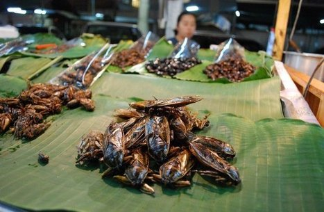 Food: Buggy beverages – Isaan dream, health concern or mixologist magic | Entomophagy: Edible Insects and the Future of Food | Scoop.it