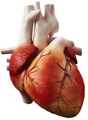 Patentan biomoléculas que facilitan la predicción de problemas cardiacos   Aprendiendo a Distancia   Scoop.it