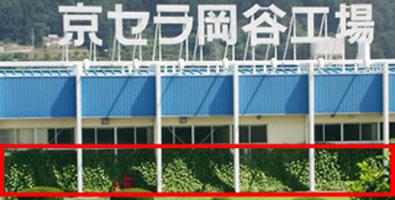 Kyocera fait pousser des «murs végétaux» sur ses sites | Japan Tsunami | Scoop.it
