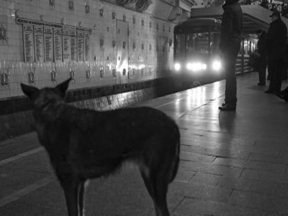 Stray Dogs Have Learned To Master Moscows Immense And Complex Subway System | Amazing Science | Scoop.it