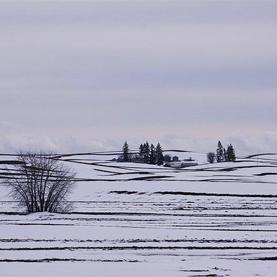 Dryland Farmers Work Wonders without Water in U.S. West: Scientific American   science today   Scoop.it