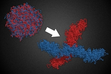 Study: Molecular motors shape chromosome structure | DNA & RNA Research | Scoop.it