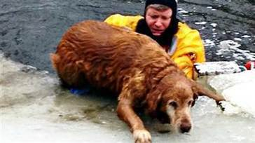 Firefighter rescues dog from icy pond | Pets Decisions | Scoop.it