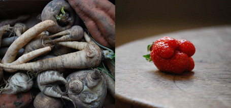 Culinary Misfits: Cutting down on food waste by using imperfect fruit and vegetables | The Future of Waste | Scoop.it