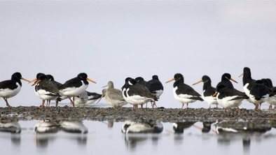 Phone app highlights threat to birds | 100 Acre Wood | Scoop.it