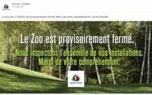 Tarn : fillette mordue par un lynx, le zoo des 3 Vallées fermé pour ... | L'actualité tarnaise 2014 | Scoop.it