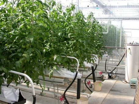 Grow pipes - an energy advantage | Energy Edge | Vertical Farm - Food Factory | Scoop.it