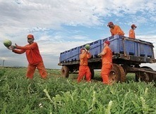 Alabama Agriculture Department Advances Plan To Replace Immigrant Workers With Prisoners | Working on a dream | Scoop.it