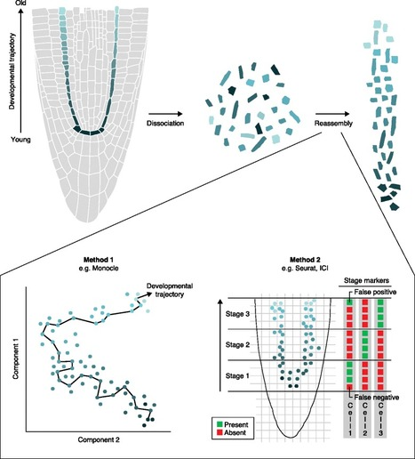 The potential of single-cell profiling in plants | MycorWeb Plant-Microbe Interactions | Scoop.it