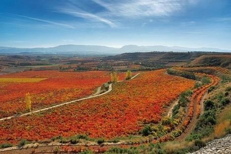 New Wave Spain | Vitabella Wine Daily Gossip | Scoop.it