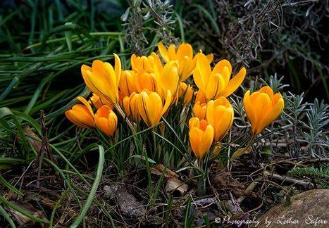 Blumen und Blüten. Frühlingsblumen, Sommerblumen und Herbstblumen | kostenlose-Bilder | Scoop.it
