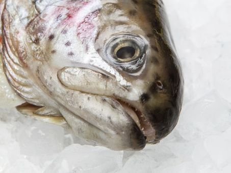 Antibiotics found in 'antibiotic-free' seafood headed for Arizona | Sustain Our Earth | Scoop.it