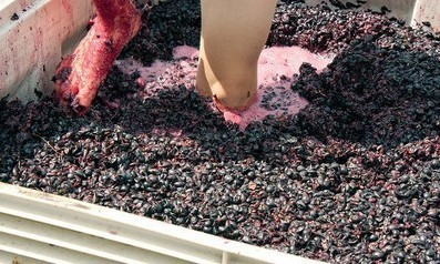 Only in France: 'Drive slowly - grape juice on the roads' | Vitabella Wine Daily Gossip | Scoop.it