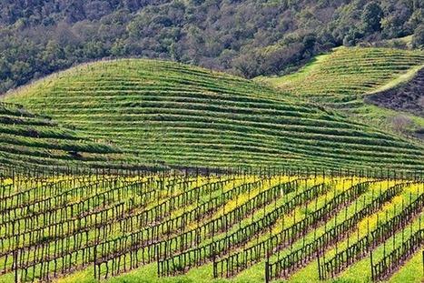 Panel picks out top single site Napa Cabs | Vitabella Wine Daily Gossip | Scoop.it
