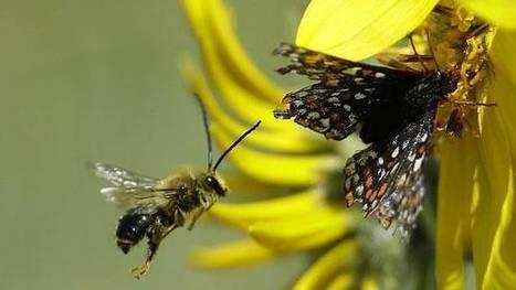 [Ecouter] De la vie des abeilles | Epicurist: In Victus Veritas | Scoop.it