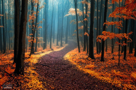 26 Magical Paths You Have To Walk On At Least Once In Your Lifetime | Awesome ReScoops | Scoop.it