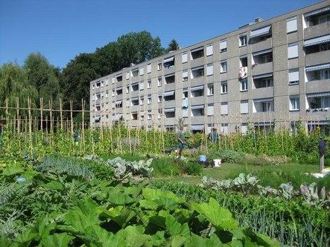 Praktische tuin inspiratie « Visionair.nl   Groene vingers   Scoop.it