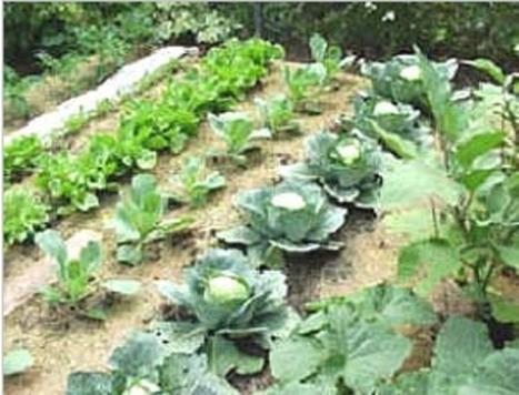 No-till Gardening | Gardening Life | Scoop.it