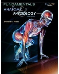 Test Bank For » Test Bank for Fundamentals of Anatomy and Physiology, 3rd Edition: Donald C. Rizzo Download | Anatomy & Physiology Test Bank | Scoop.it