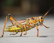 Des hormones d'insectes pour de nouveaux pesticides | EntomoNews | Scoop.it