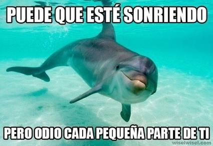 La verdadera perspectiva de los delfines sobre los humanos, y con razón | Humor24h | Scoop.it