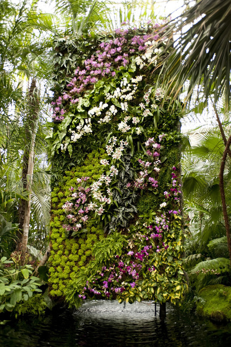 The Orchid Show: Patrick Blanc's Vertical Gardens | NYBG | Vertical Gardens | Scoop.it