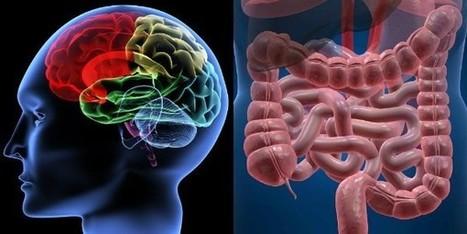 Cervello e intestino non sono organi così lontani: nasce la Psicobiotica | Psichiatria e Medicina di Base. Quando lo Psichiatra incontra il Medico di Famiglia | Scoop.it
