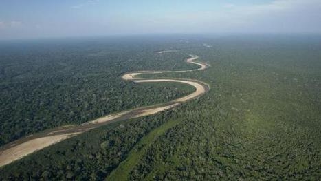 Equateur. Plus de 647 000 arbres plantés en une journée, record à battre | Crakks | Scoop.it