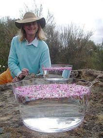 Les Elixirs du Bush autralien - Art'Stella, élixirs floraux | Elixirs floraux | Scoop.it