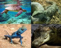 REPTILES | zoologia | Scoop.it