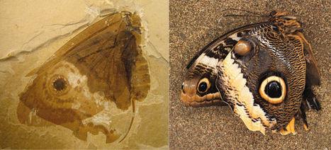 Butterflies Forty Million Years Before Butterflies | Views of Evolution | Scoop.it