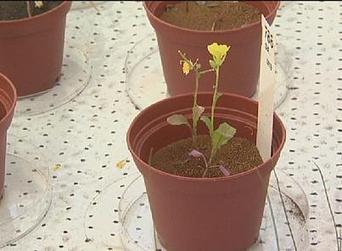 Plant life on Mars | Erba Volant - Applied Plant Science | Scoop.it