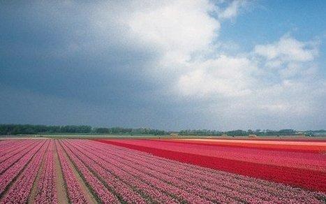 Holland.com Keukenhof | nelmspaul - Links | Scoop.it