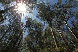 Climate change set to give us a home without the gumtrees | Holistic Forest Management | Scoop.it