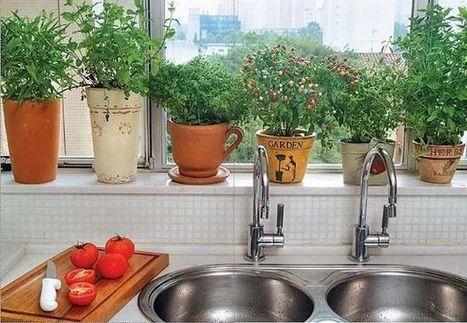¿Cómo hacer un huerto de plantas aromáticas y medicinales? - Los Andes (Argentina) | Flores | Scoop.it