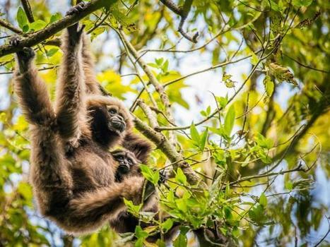Many more species at risk from Southeast Asia tree plantations, study finds   Gaia Diary   Scoop.it