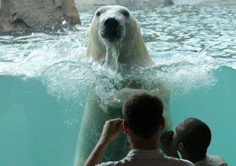 Kansas City Zoo | Kansas City Talk | Scoop.it