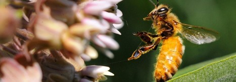 Systemic Pesticides | The Task Force on Systemic Pesticides | Health and Inhumanity | Scoop.it