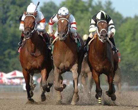 New York state reins in horse-racing deaths | Horse Racing News | Scoop.it