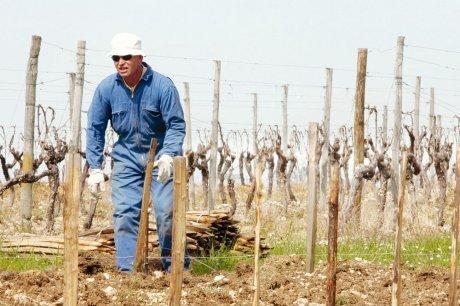 Le vignoble craint une libéralisation à outrance | Agriculture en Dordogne | Scoop.it