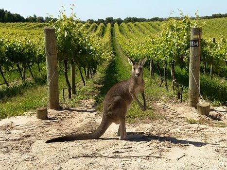 Aussie wine value rises as volume drops - The Drinks Business | Wine News | Scoop.it