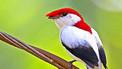 BBC Mundo - Noticias - Las 100 especies más amenazadas   Natura educa   Scoop.it