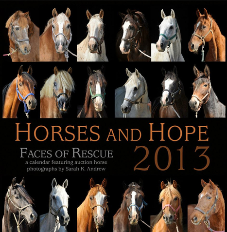 Gift of Giving: 2013 Horses and Hope Calendar Helps Horses in Need 365 Days of the Year (and keeps you organized!) | Horse Product News | Scoop.it